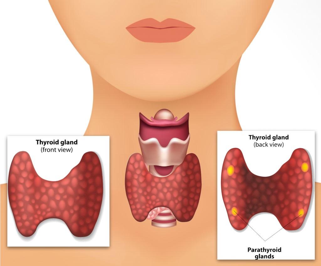 ParaThyroid Treatment in Pune