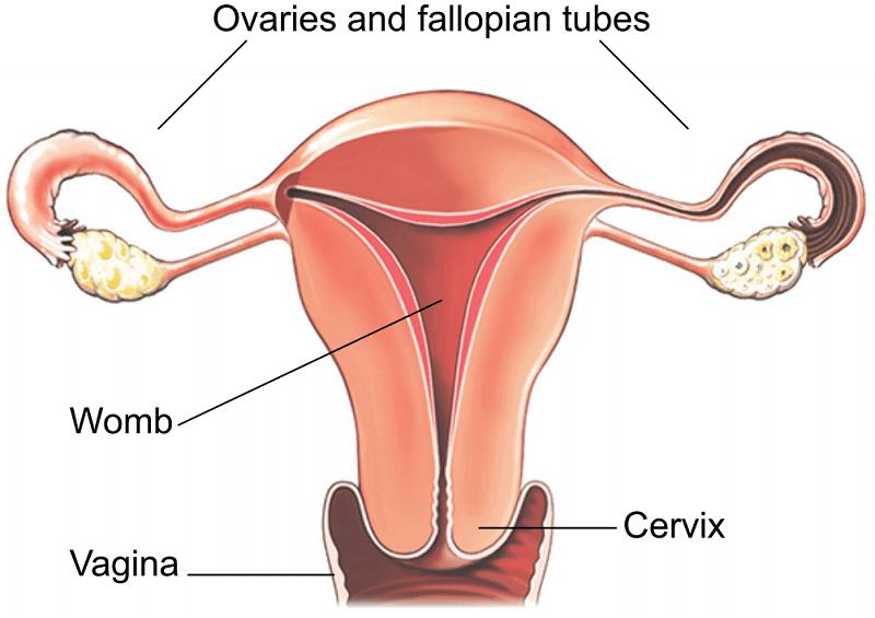 Laparoscopic hysterectomy treatment in Pune